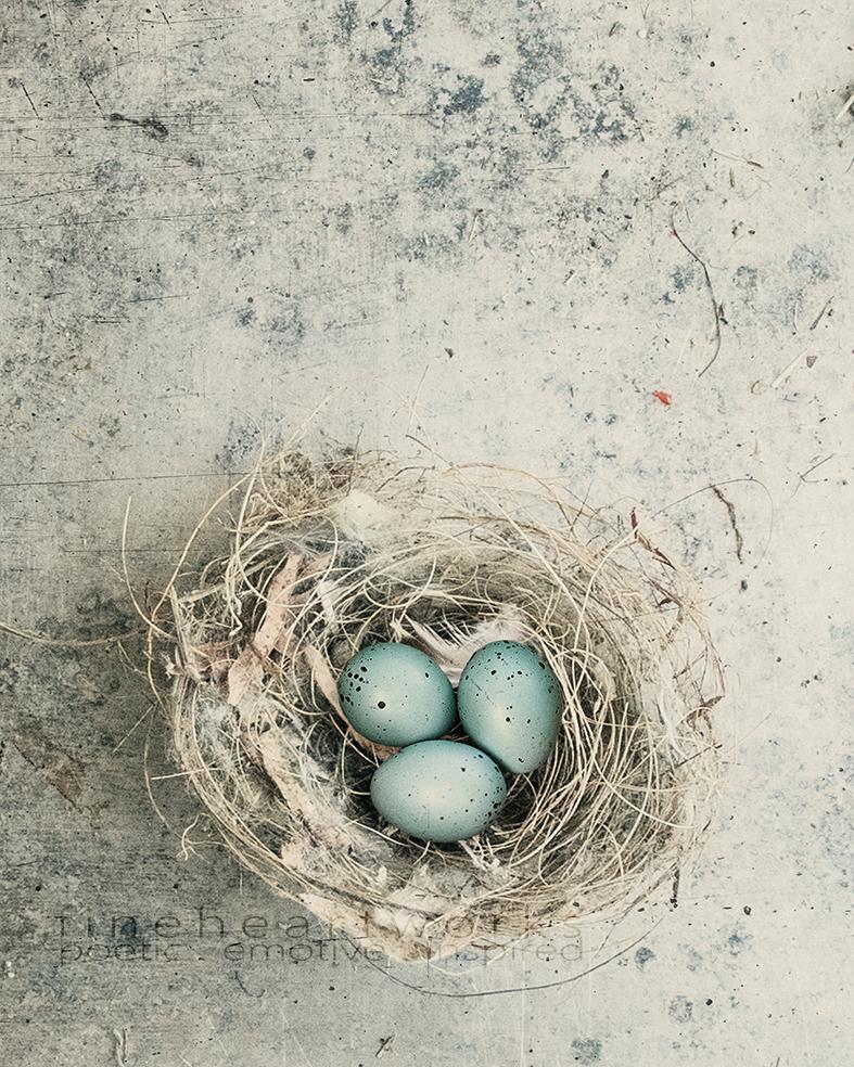 0956 with eggs hr.jpg
