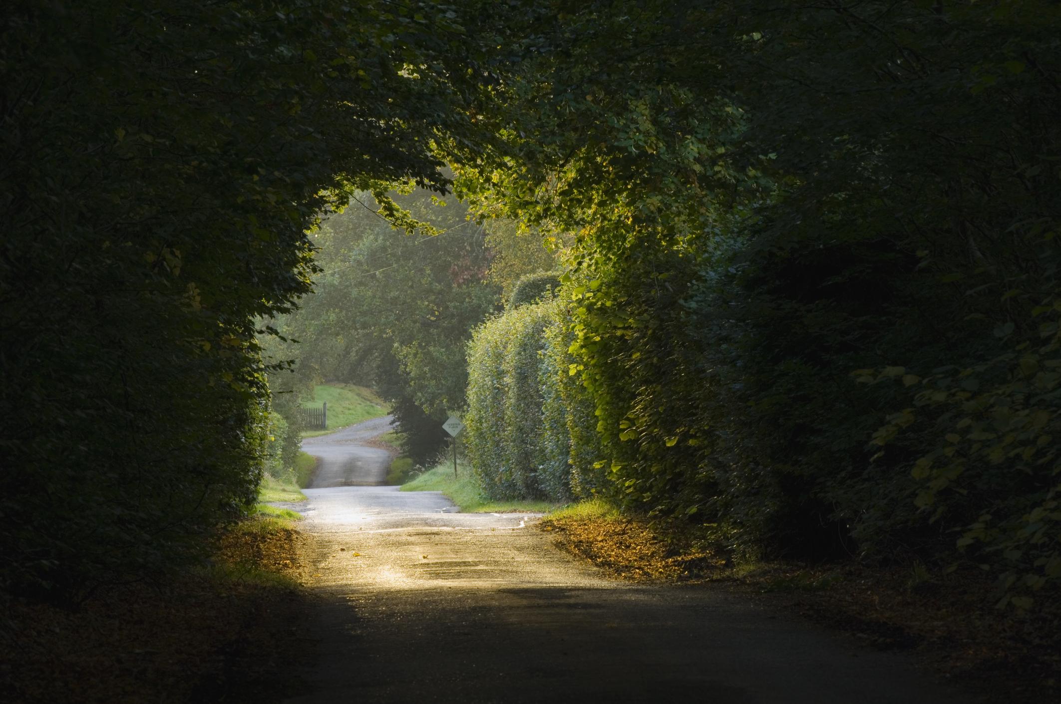 Road under tree arbort.jpg