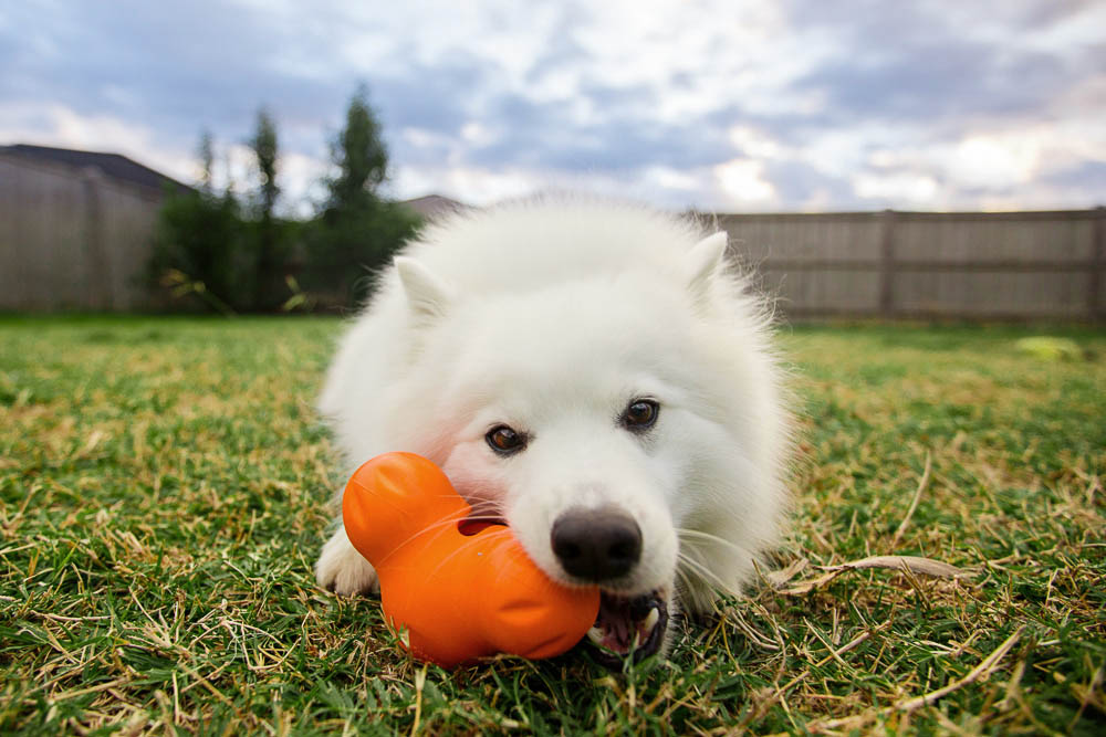 West Paw toys come with a product replacement guarantee and there are plenty of sizes and shapes to chose from for your dog!