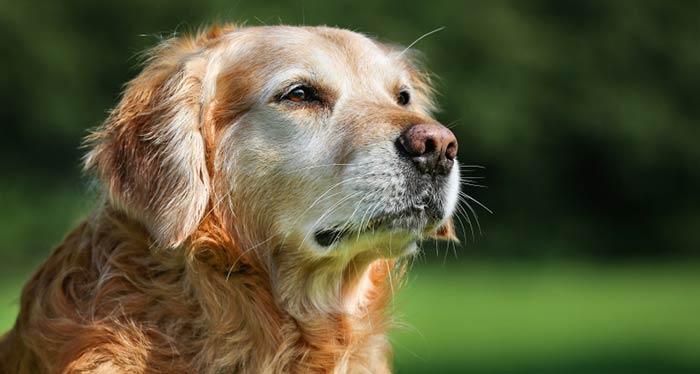 senior-pet-care.jpg