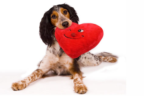 dog_with_stuffed_heart.jpg