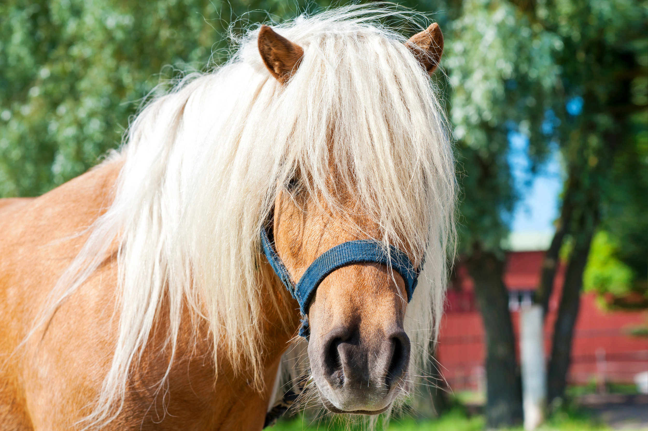Equestrian Curriculum -