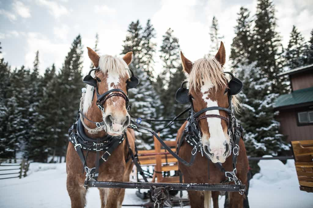 lmr.winter.2016.low-resolution.sleigh-ride.jpg