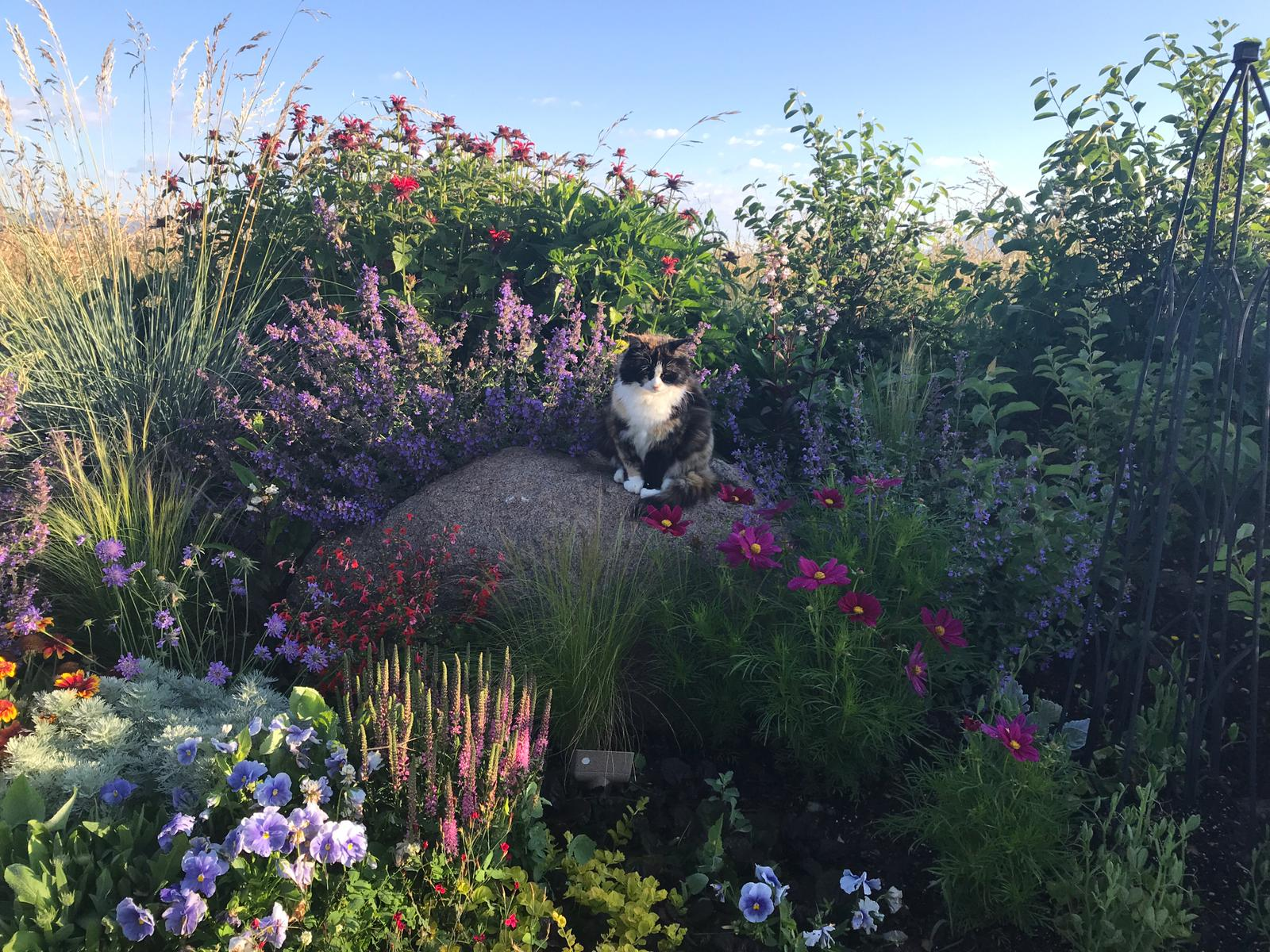 Welcome to our blog! - This is where we will share progress pics, new projects, and more than a few animal pics. (Our cat Turtle is pictured to the side.)