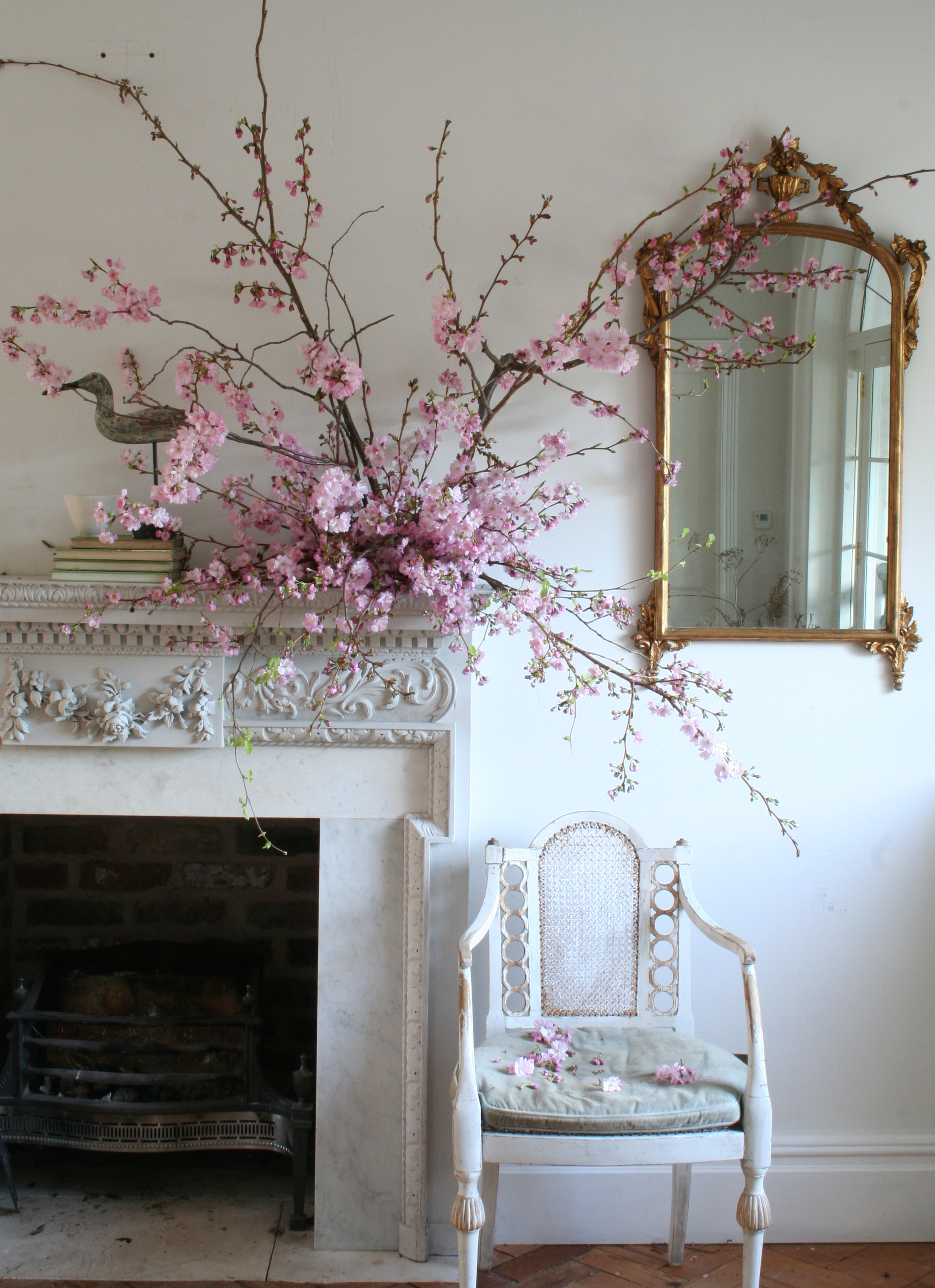 Prunus 'Accolade'. Photo by Lucy