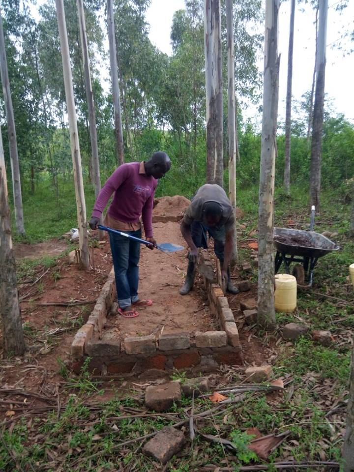 boomaanplant Rieko, Kenia.jpg