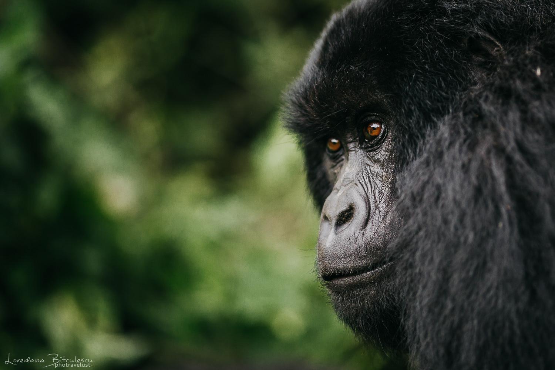 Member of Nyakamwe Family