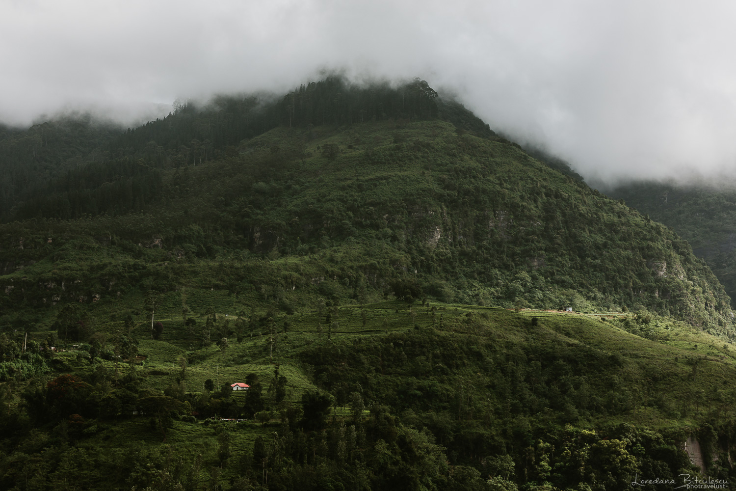 View from the Tea Factory