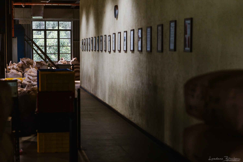 Interior from the Tea Bush Factory