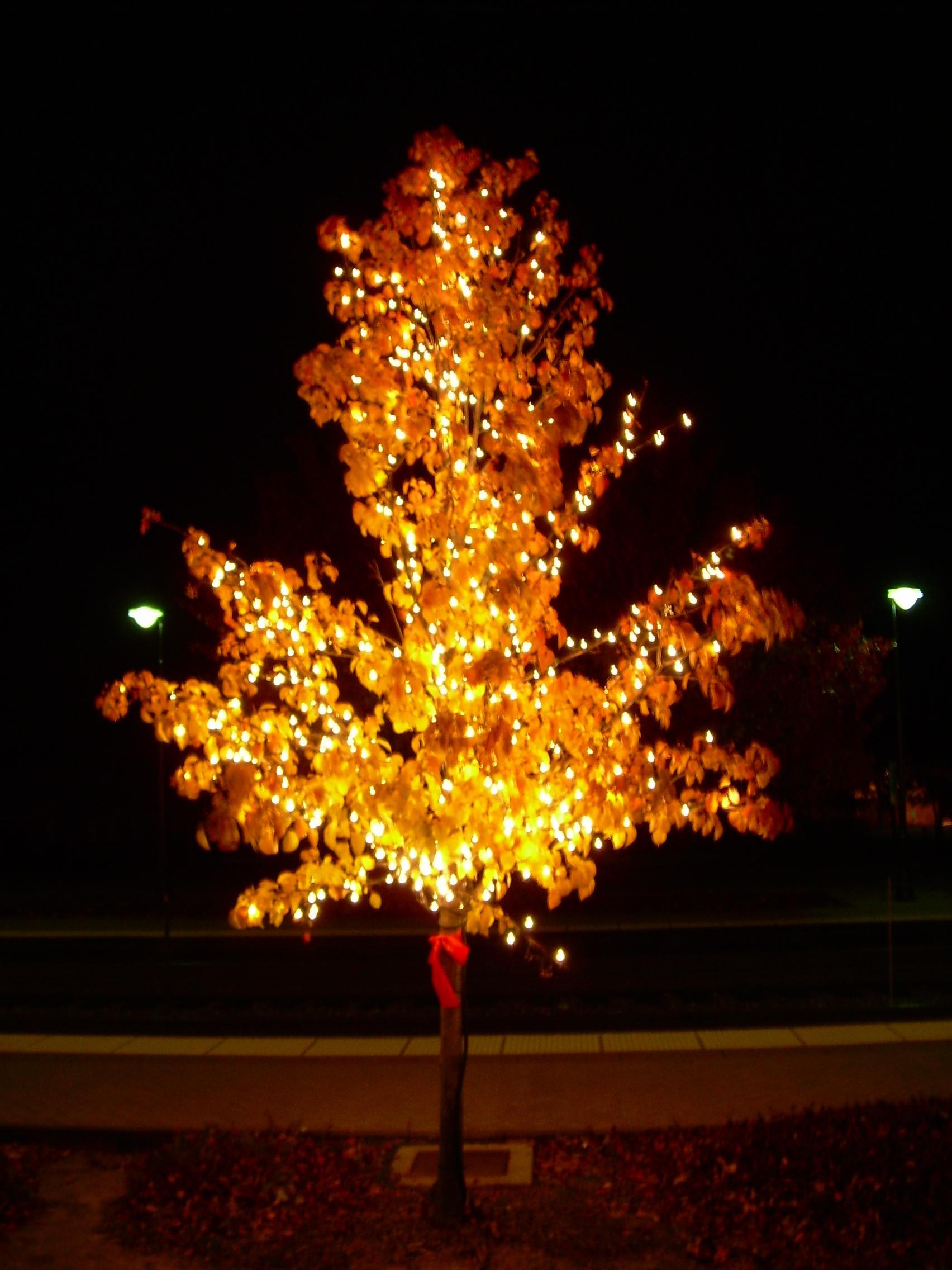Classic Tree Holiday Lighting