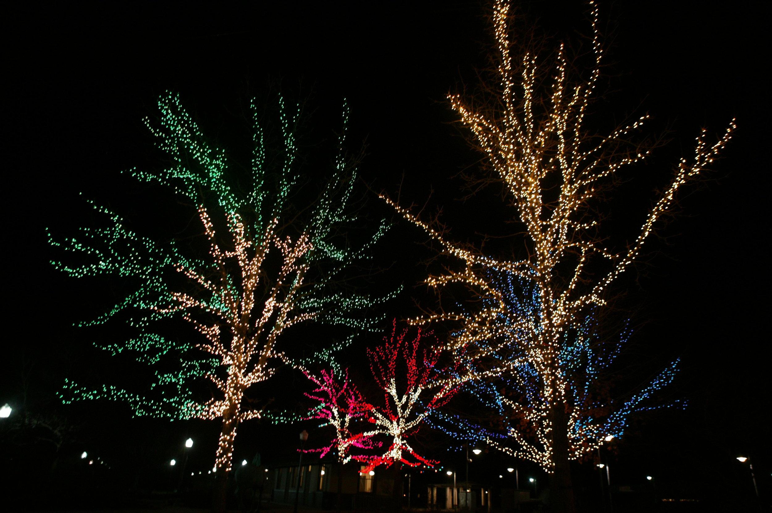 Outdoor Holiday Tree Lights