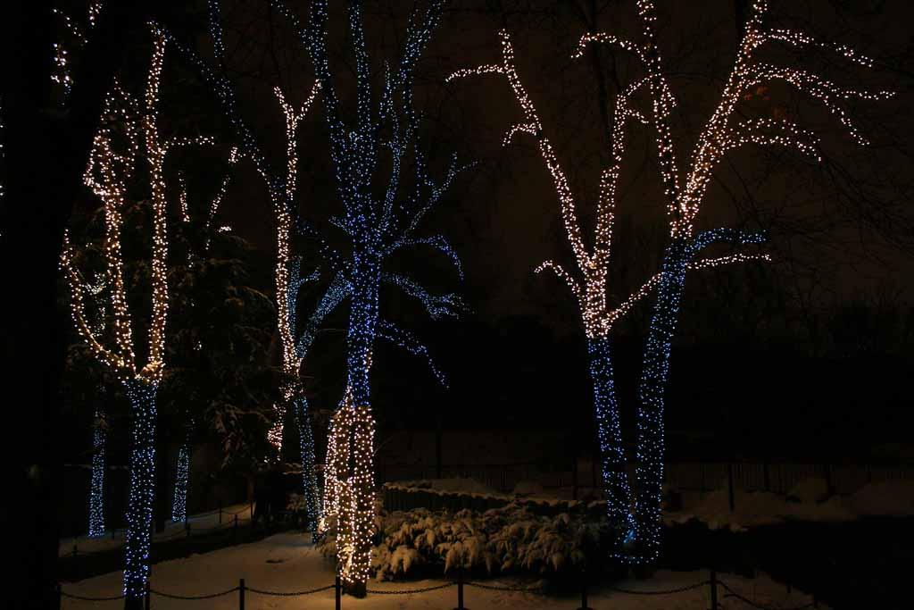LED Holiday Tree Installation