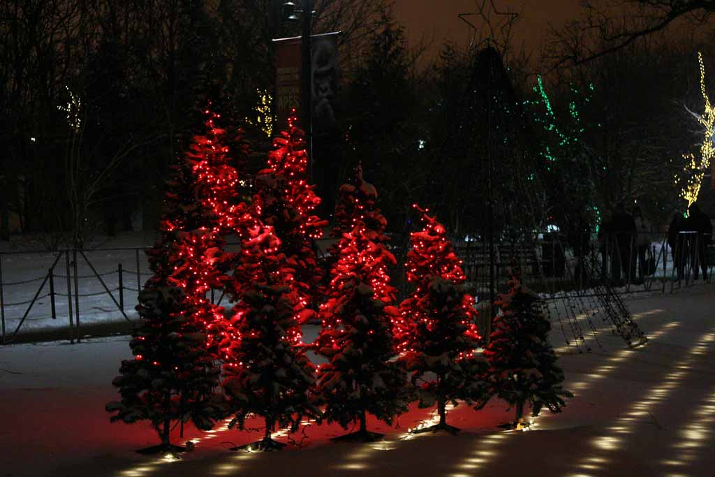 LED Lights on Holiday Trees