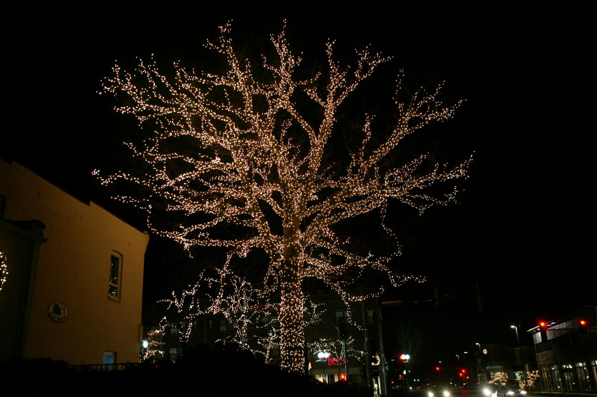 Holiday lighting for Large Tree