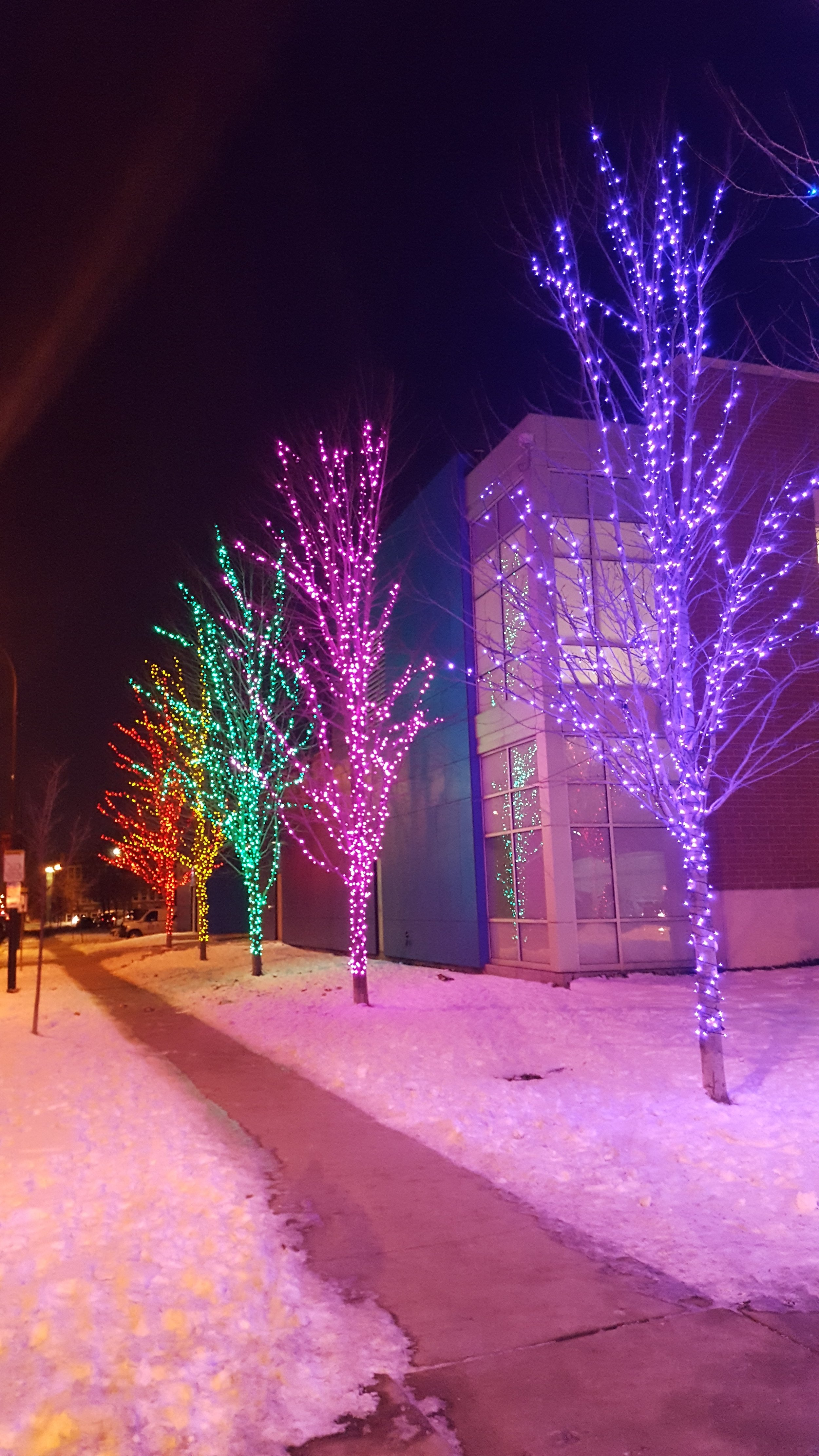 LED Colored Trees.jpg