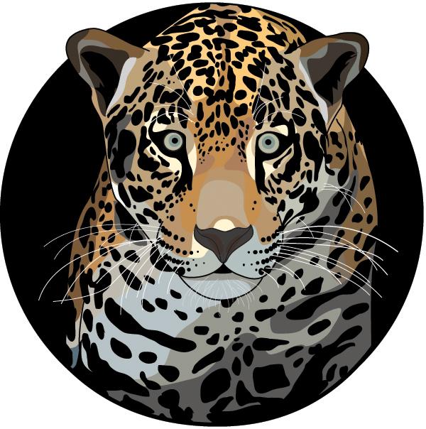 Jaguar_Color.jpg
