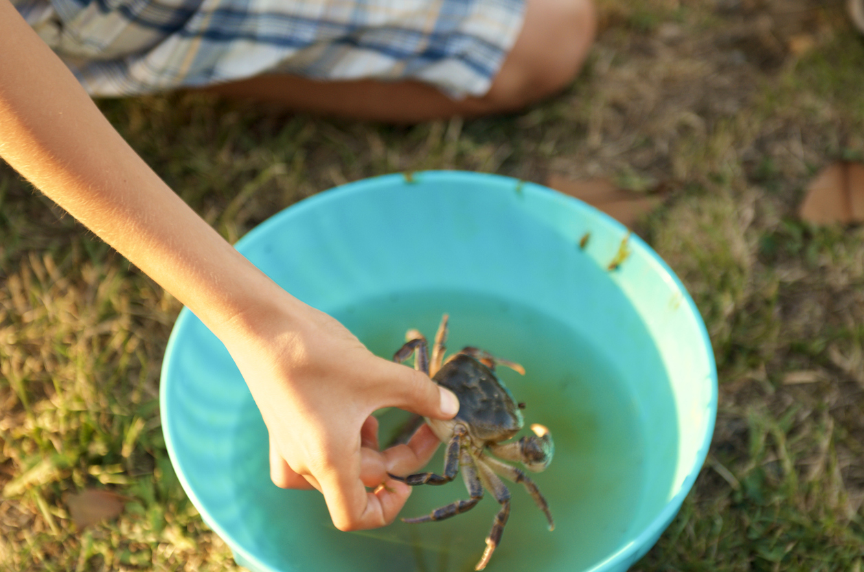 MIN ISTOCK child-hand-cautiously-takes-a-live-crab-from-a-bucket-471741504_1261x835.jpeg