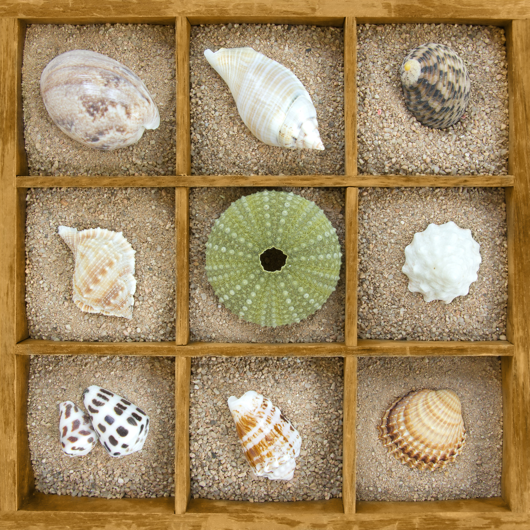 MIN ISTOCK Different-shells-collection-641633462_1735x1735.jpeg