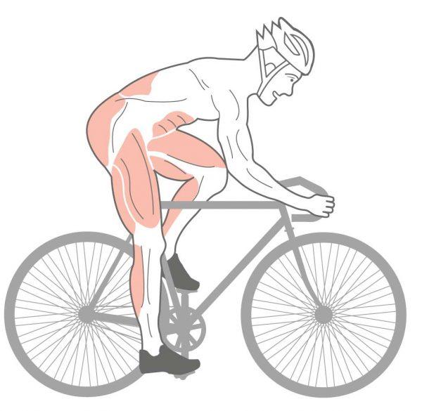valentinstag-fuer-fahrradfahrer-muskelanatomie-bikmo-blog.jpg