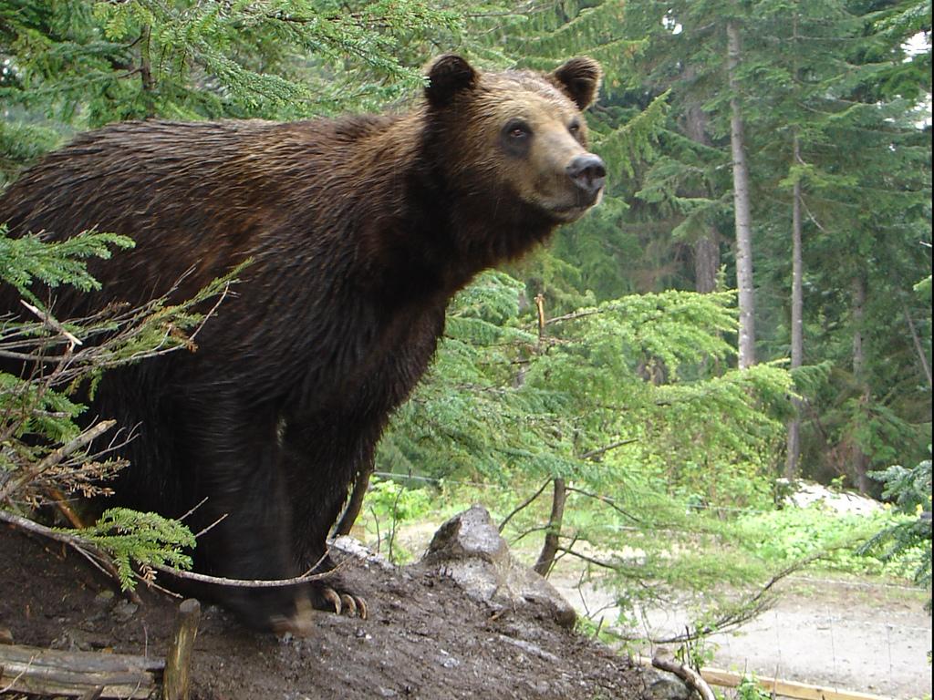 Bear .jpg