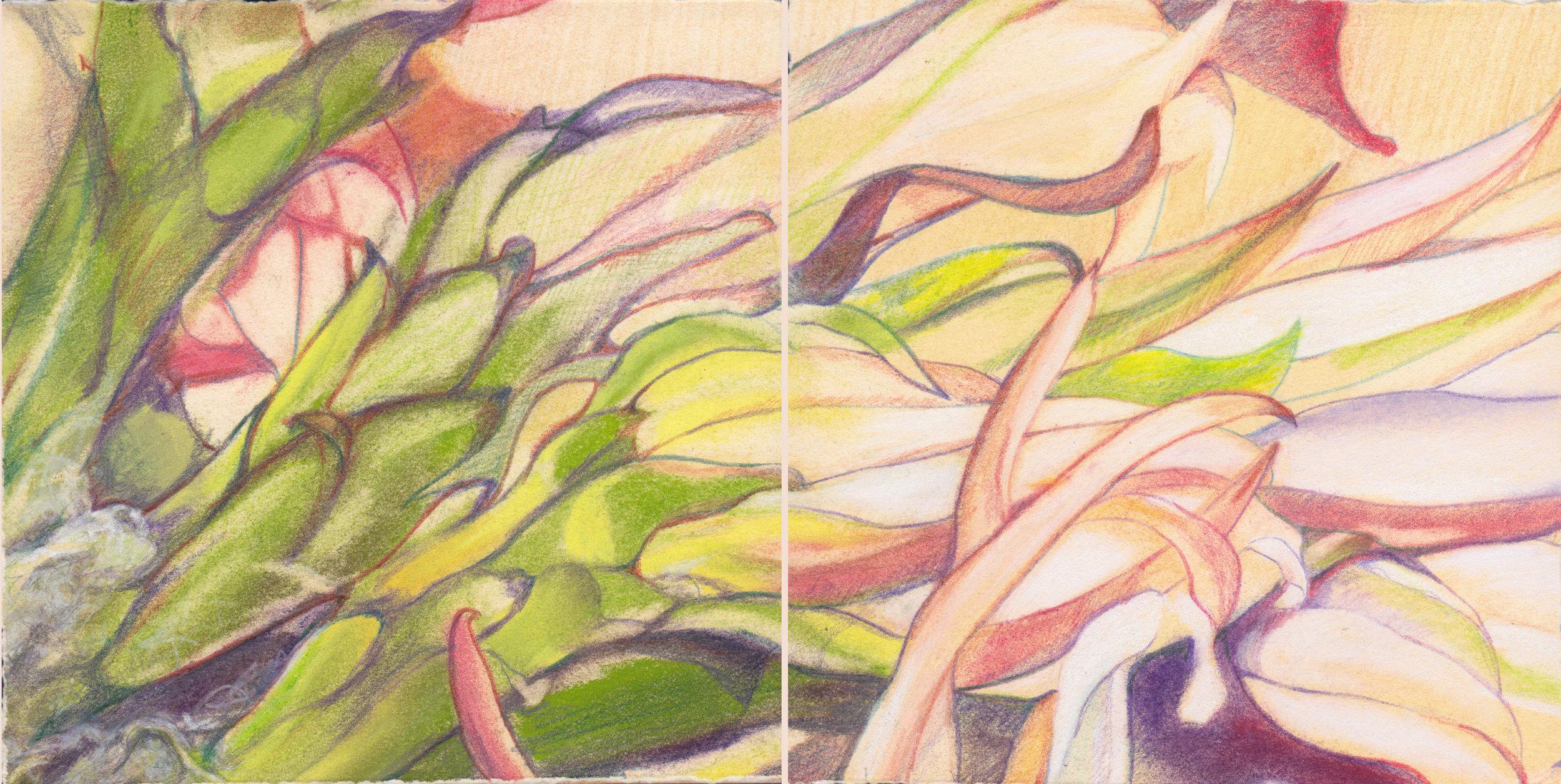 SMT3_CactusBlossoms.jpg