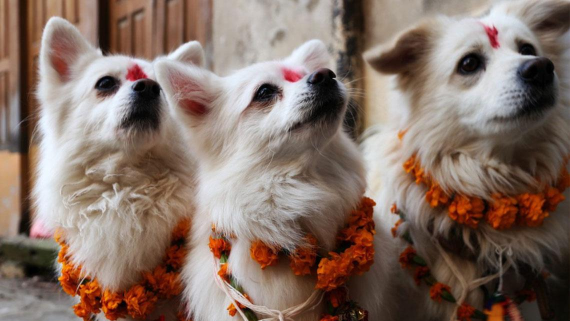 Dogs are honored creatures in many Hindu traditions.