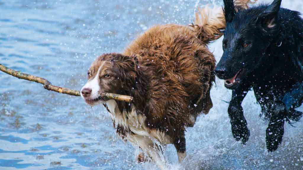 two-dogs-splash.jpg