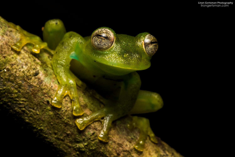 glassfrog-web.jpg