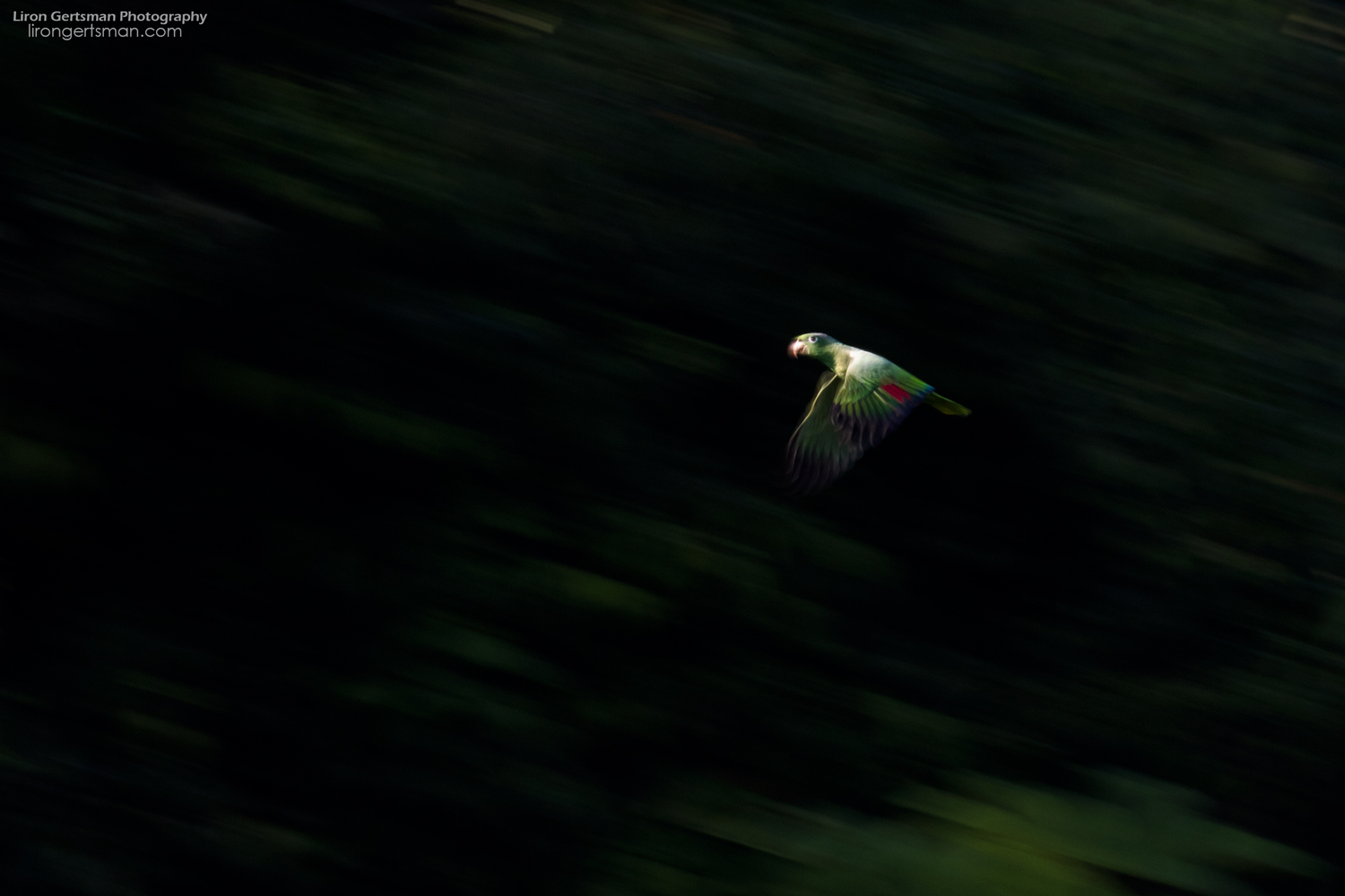 Mealy-Parrot-abstract-web.jpg