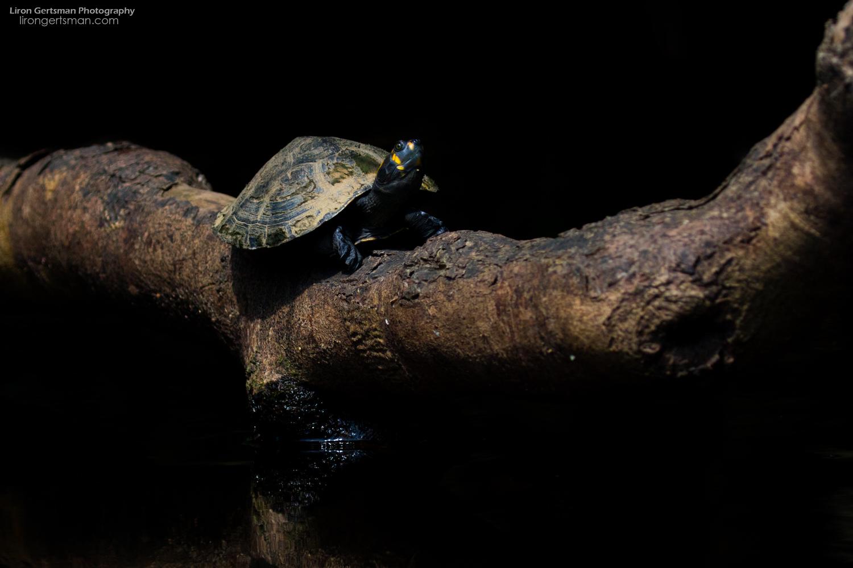 Turtle-web.jpg