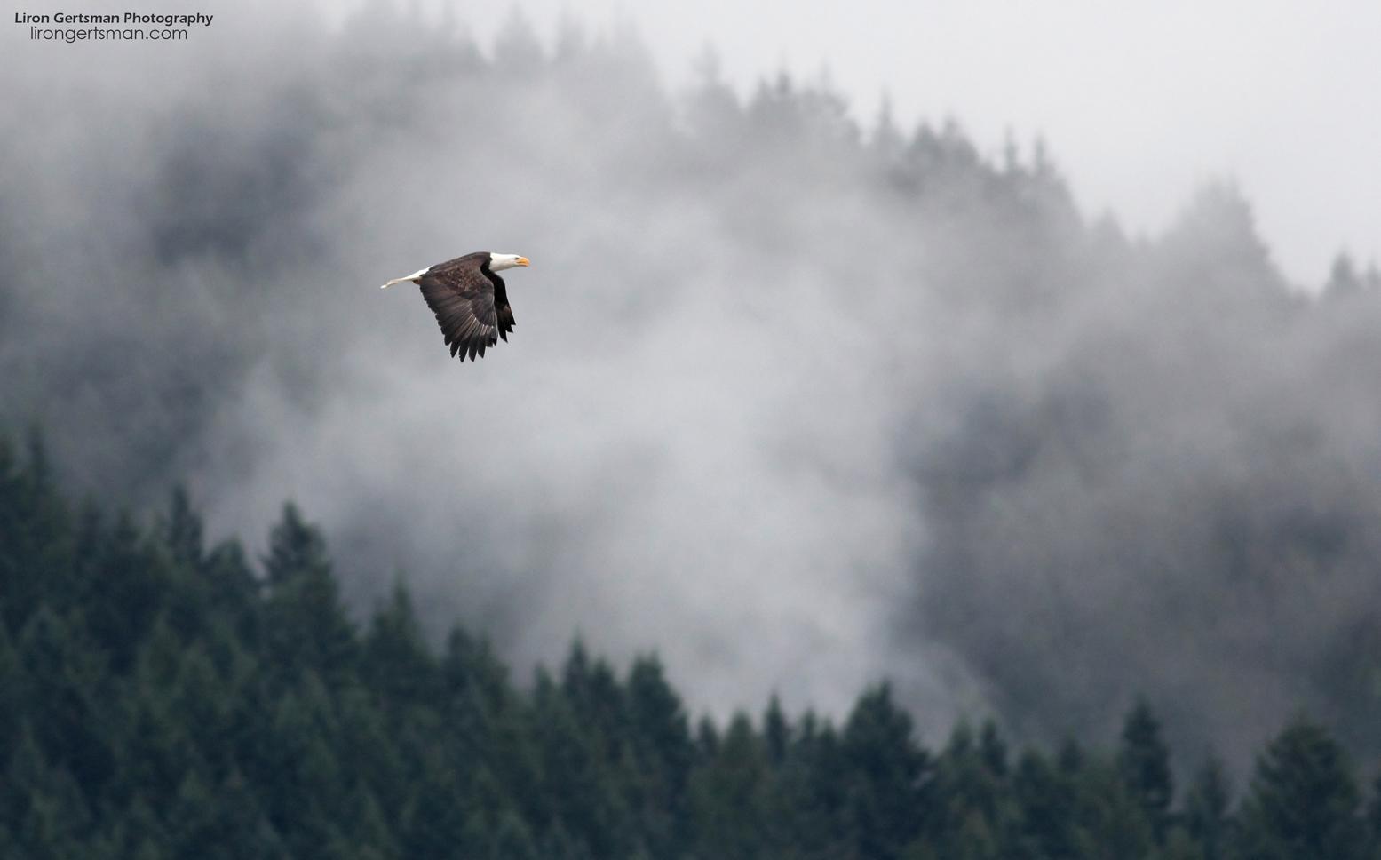 Bald-Eagle-habitat-shot-web.jpg