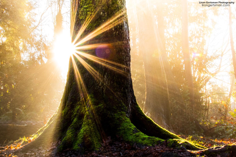 foggy-forest_web.jpg