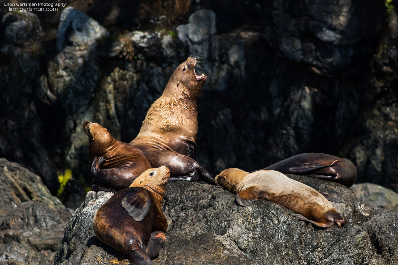 Sea-Lions1-web.jpg