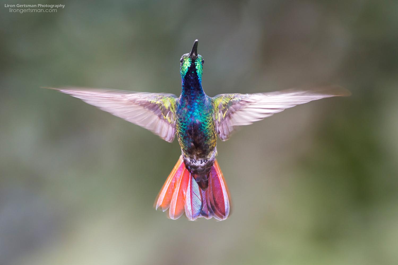Rainforest-Rapture-web.jpg