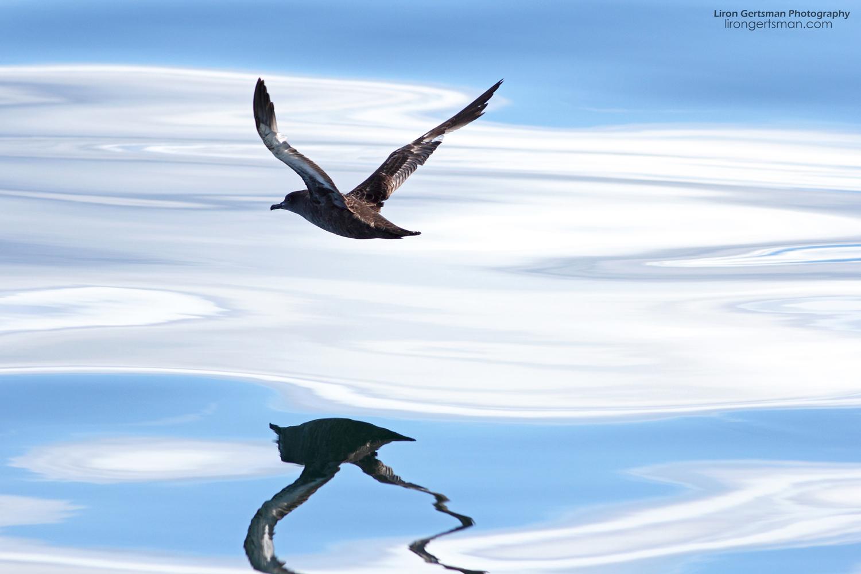 Shearwater-Reflections-web.jpg