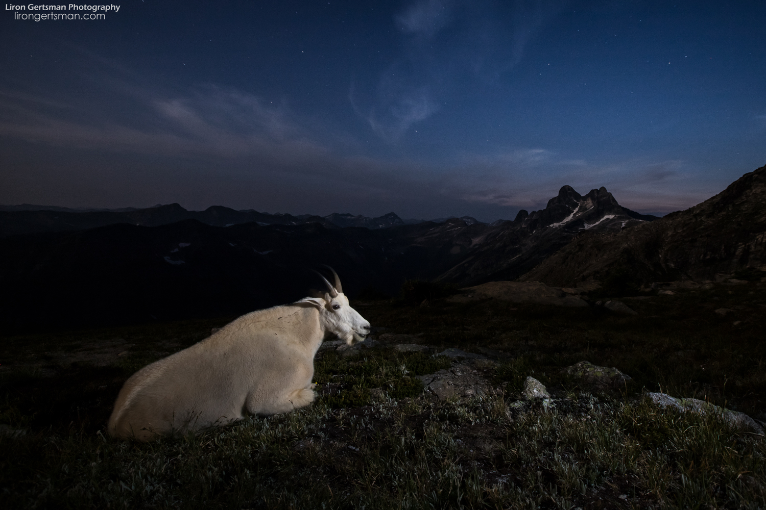 It was incredibly picturesque to observe the goats relaxing at twilight as stars began to emerge in the sky. While they were surely just resting, it almost seemed as though they were enjoying taking in the scenery as much as I was.