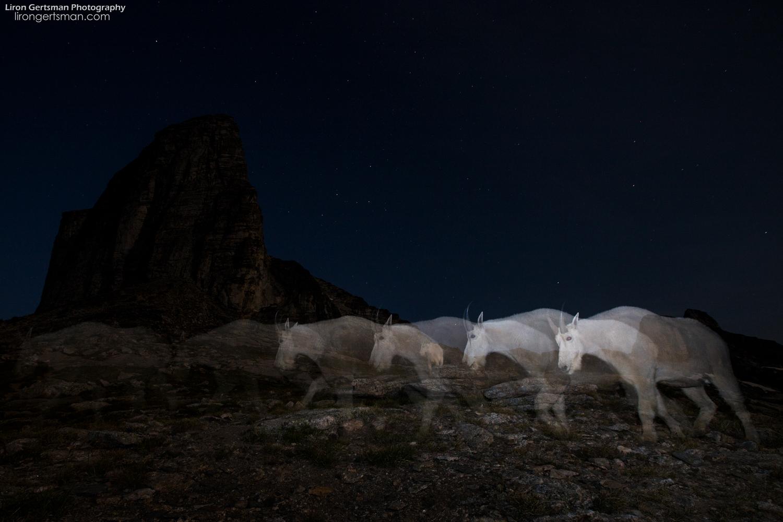 Mountain-Goat-Ghosts-2-web.jpg