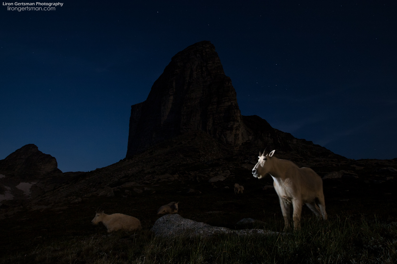 Mountain-Goats-mountain-stars-web.jpg