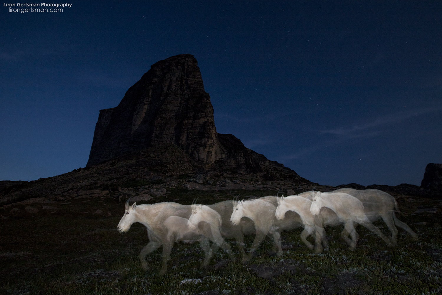 Mountain-Goat-Ghosts-with-peak-dodge-and-burn-web.jpg