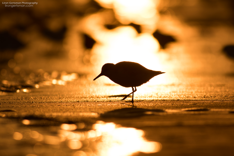 Sandpiper-and-Sunrise-web.jpg