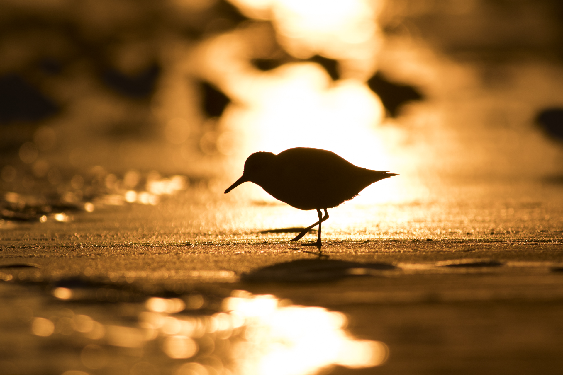 Sandpiper and Sunrise.jpg