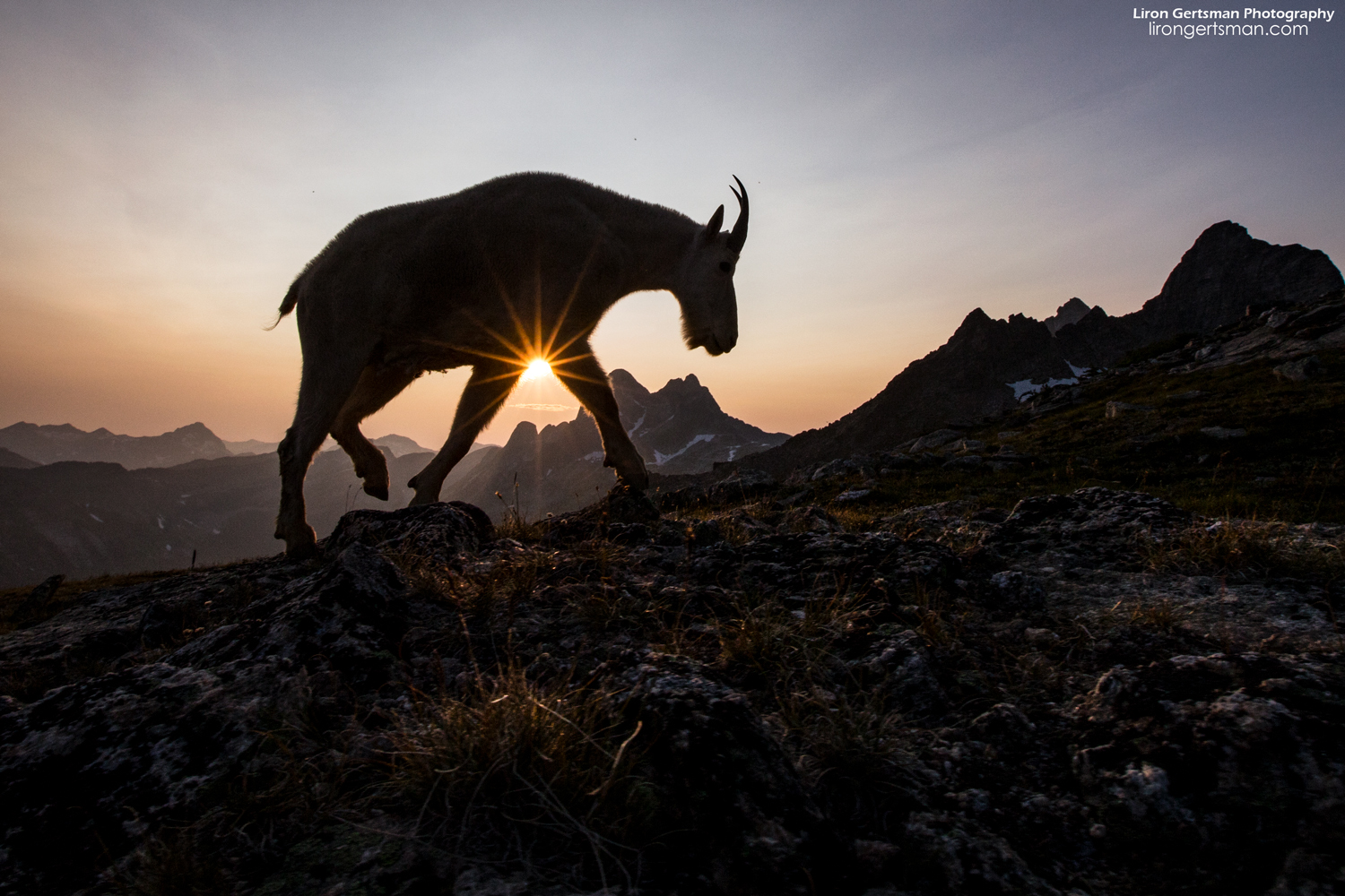 "The sunsets on the mountain were spectacular. I spent some time photographing goat silhouettes against the evening sky and was happy with this shot which features a sun ""starburst""."