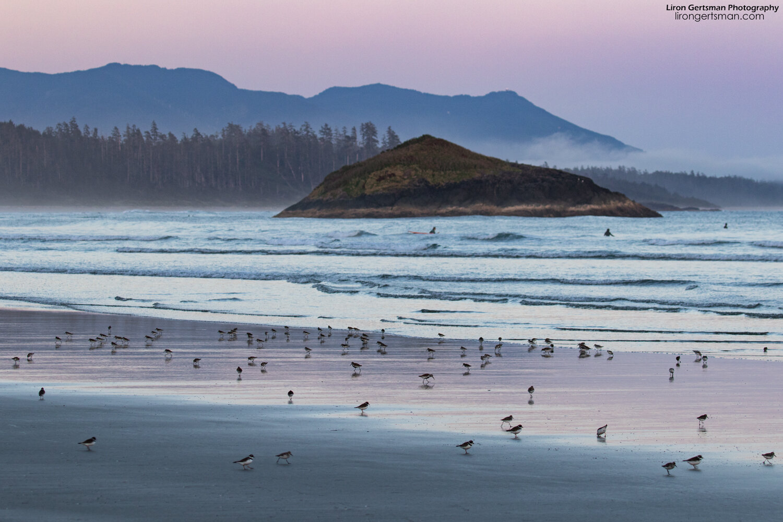 Sandpipers-sunset-web.jpg