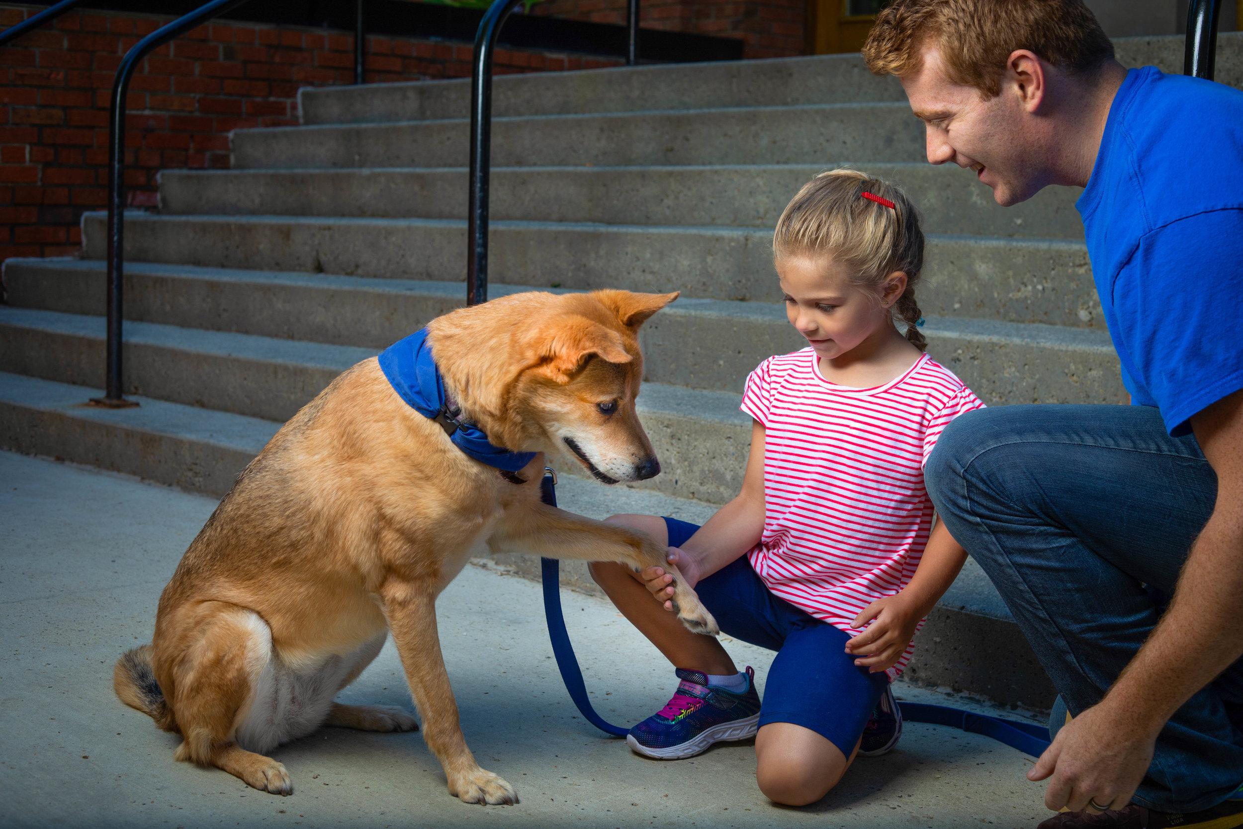 CAAWLS WELLNESS DOG  Description here...
