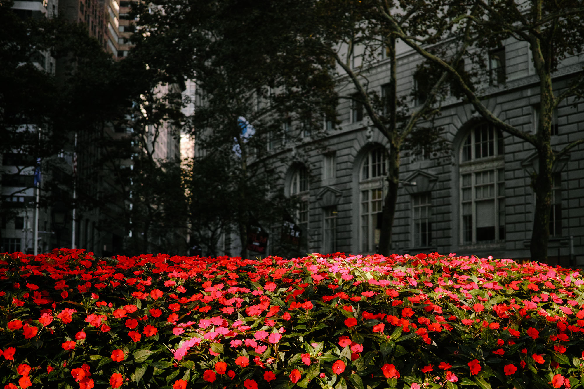 Flowers in the Financial District of Manhattan. Sigma DP2 Merrill, 1/800 @ f/2.8 ISO 250