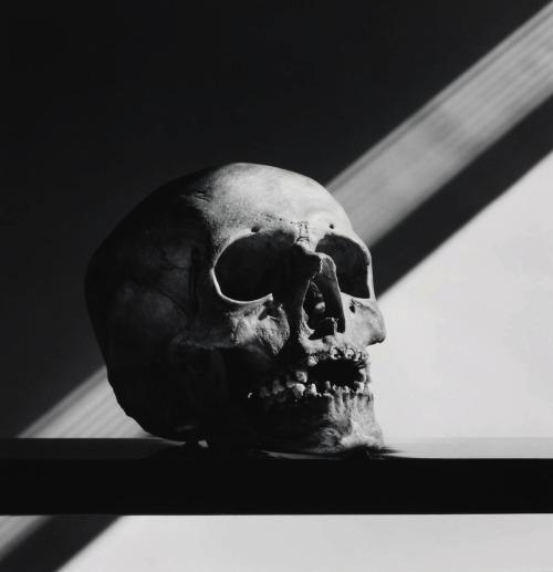 Skull (1988) –Robert Mapplethorpe