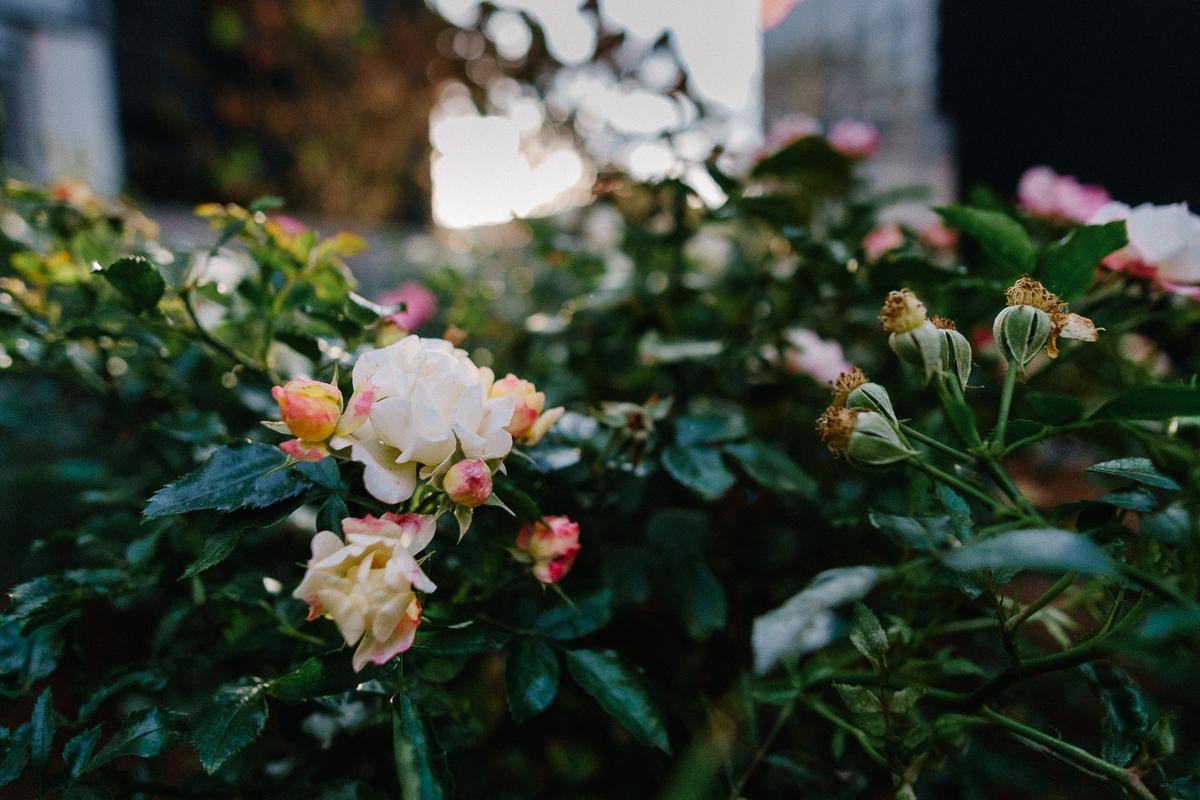 Flowers in Midtown. Fuji X-pro1, Rokinon 12mm f/2.