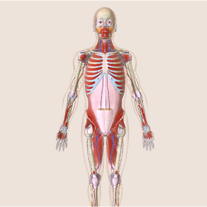 Body map.png
