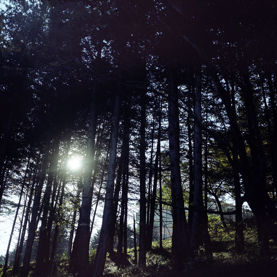 49-light-through-trees-tama.jpg