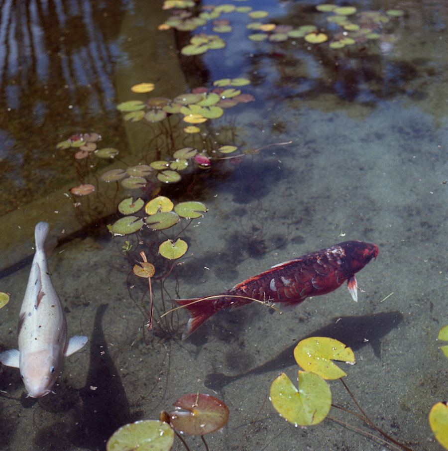 balboafishies.jpg